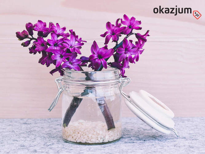S3 okazjum jesienny kwiat do mieszkania